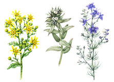 Summer Field Flowers Set. Hand drawn floral set. Watercolor wild larkspur, yellow chamomile and small white flowers  on blank background. Summer wildflowers Royalty Free Stock Image