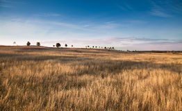 Summer field with grass and blue sky Stock Photography