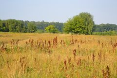 Summer field. Royalty Free Stock Images
