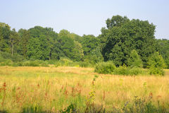Summer field. Royalty Free Stock Image