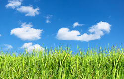 Summer field of green grass Stock Photos