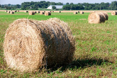 Summer Field with Hay Bale as background Royalty Free Stock Photography