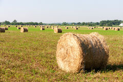 Summer Field with Hay Bale as background Royalty Free Stock Image