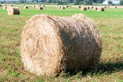 Summer Field with Hay Bale as background Royalty Free Stock Images