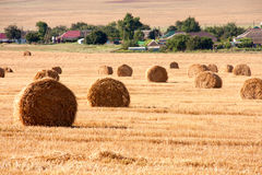 Summer Field with Hay Bales as background Royalty Free Stock Photos