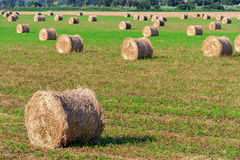 Summer Field with Hay Bales as background Royalty Free Stock Images