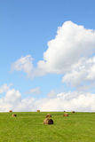 Summer field with  hay bales Stock Image