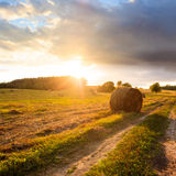 Summer Field with Hay Bales at Sunset Royalty Free Stock Photography