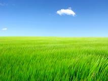 Summer field landscape Stock Photos