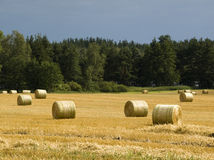 Summer field landscape Royalty Free Stock Photography
