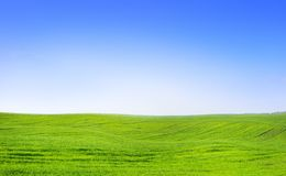 Summer field landscape Stock Image