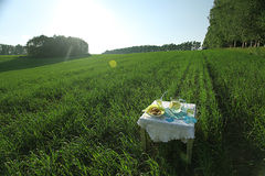 Summer field with lemonade Stock Photo
