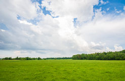 Summer field, massive sky scape. Green summer field, massive clouds Royalty Free Stock Images