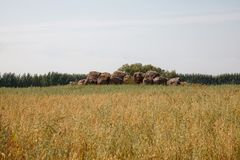 Summer field / meadow. Rural agriculture royalty free stock photos