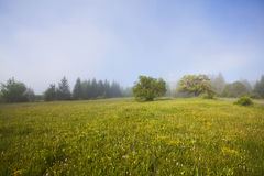 Summer field in morning fog Stock Image