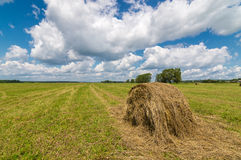 Summer field with mowed grass and haystack, Stock Images