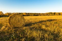 Summer field with mowed grass and haystack, Royalty Free Stock Images