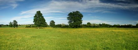 Summer field panorama Royalty Free Stock Photos