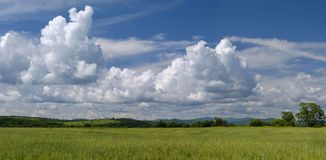 Summer in field, panorama. Royalty Free Stock Images
