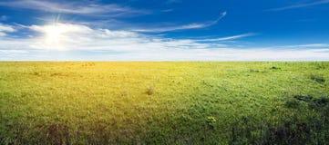 Summer field panorama Stock Photography
