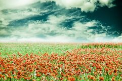 Summer field of poppies with beautiful cloudy sky