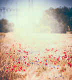 Summer field of red poppies. Floral landscape Royalty Free Stock Photography