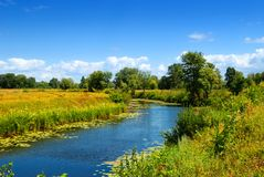 Summer field with river Stock Image