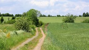 Summer field with road and sun in blue sky. Summer landscape with green field and road stock footage