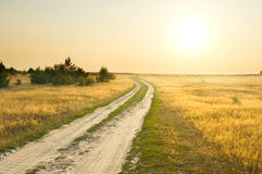 Summer field Stock Image