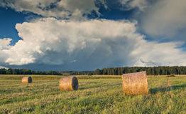 Summer field with rolls of haystacks in countryside Stock Images