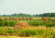 Summer field with rolls of straw. Harvested summer field with rolls of straw Royalty Free Stock Photography