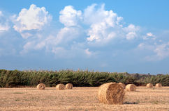 Summer field Scenery with Haystack. Agriculture Concept. Stock Photo