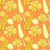 Summer field seamless pattern. With chamomile and spike Stock Photography