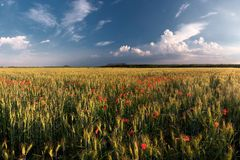 Summer field and sky Royalty Free Stock Image