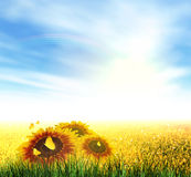 Summer, Field, Sky, Sun, Rainbow, Grass, Sunflowers Stock Photography