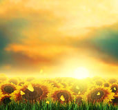 Summer, Field, Sky, Sun, Sunset, Grass, Sunflowers, Butterflies. Summer Landscape With Field, Sky, Sun, Sunset, Tree, Grass, Sunflowers And Butterflies Royalty Free Stock Photo