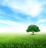 Summer, Field, Sky, Tree, Grass, Flowers Stock Photography