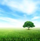 Summer, Field, Sky, Tree, Grass, Flowers Stock Photography