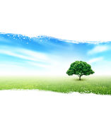 Summer, Field, Sky, Tree, Grass, Flowers. Summer Landscape With Field, Sky, Tree, Grass, Flowers On A Painted White Background Stock Photography