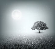 Summer, Field, Sky, Tree, Grass, Moon, Evening Royalty Free Stock Photos