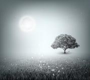 Summer, Field, Sky, Tree, Grass, Moon, Evening Royalty Free Stock Photos