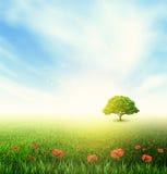 Summer, Field, Sky, Tree, Grass, Poppy Royalty Free Stock Photography