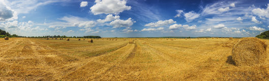Summer field with straw mows at daylight panoramic shot Royalty Free Stock Photos