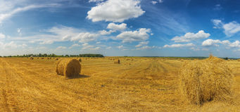Summer field with straw mows at daylight Royalty Free Stock Photography