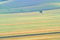 Summer field stripes Stock Photography