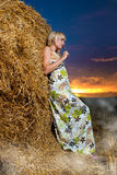 Summer field sunset Royalty Free Stock Images
