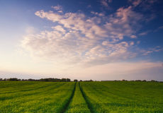 Summer field at sunset. Royalty Free Stock Photography
