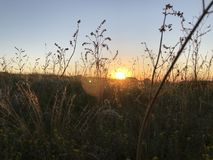 Summer field at sunset with feather grass. On blue sky stock photo