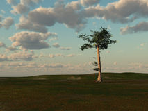 Summer Field with Tall Pine Tree. A fantasy illustration of a summer field horizon during a partly cloudy day with a single tall tree Stock Images