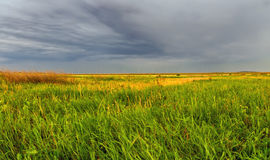 Summer Field Before A Thunderstorm. Summer field with yellow flowers under a gray dramatic sky before a thunderstorm Stock Photo